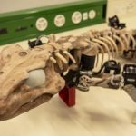 Scientists have created a robotic copy of the ancient lizard