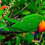 Μια ειδική κάμερα έδειξε πώς τα πουλιά περιηγούνται στο φύλλωμα των δέντρων.