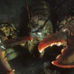 """Lobsters inspirálta a tudósokat, hogy hozzanak létre """"szuperhős"""" páncélt"""