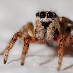 Petrified spider can shine eyes even after millions of years