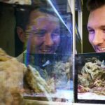 Experiment: Do fish recognize themselves in the mirror?