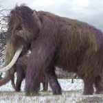 Scientists resumed the activity of the cells of the ancient mammoth