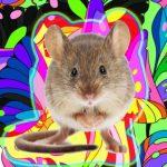 A tudósok felfedeztek egy váratlan tényt a hallucinációkról