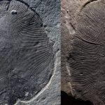 Scientists were wrong about the appearance of one of the first animals on Earth