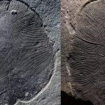 لقد أخطأ العلماء في ظهور أحد الحيوانات الأولى على الأرض