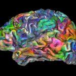 Австралийските невролози са успели да предскажат избора на хората 11 секунди преди да вземат решения.