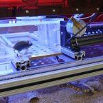 Les souris de laboratoire peuvent être testées quand elles veulent