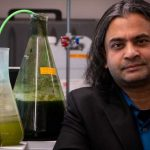 Вчені розробили дешевий спосіб виробництва біопалива з водоростей