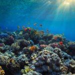 Маленький зразок води може розповісти про біологічне різноманіття морів і океанів
