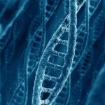 Found variations of genes that protect against obesity and diabetes
