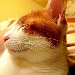 Katte ved, at du henviser til dem ved navn - selvom de vælger at ignorere
