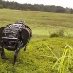 It's time to give artificial intelligence the same protection as animals
