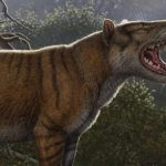 "A new species of ancient ""cats"" that were larger than polar bears has been discovered."