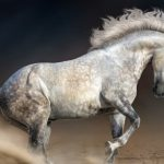 The liquid blood of an extinct horse 42,000 years ago will allow it to be created