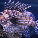 Les scientifiques ont amélioré la technologie de suivi des grands poissons et d'analyse de l'eau de mer