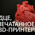 High technology news: the world's first heart printed on a 3D printer