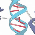 Is the risk of using CRISPR justified? Let's think