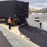 # video | Why in the reservoir of Los Angeles poured 96 million black balls?