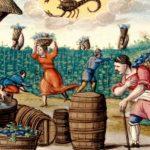 A kerámia edények azt mondták, hogy középkori parasztokat ettek