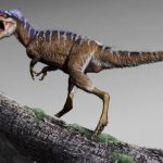 New discovery of paleontologists explained the evolution of huge tyrannosaurs