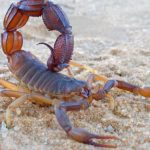 How does scorpion poison detect brain cancer?
