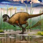 Пір'я з'явилися раніше птахів і динозаврів і не були призначені для польотів