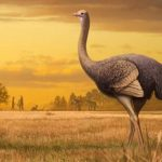På Krim, fundet resterne af den største fugl i historien