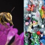 Bees began to build nests completely from plastic waste