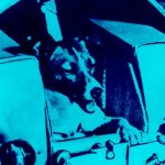 الكلاب سوف تطير إلى الفضاء مرة أخرى. لماذا؟