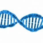 Can genes be patented? The controversy continues
