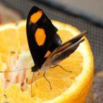 لماذا الحشرات الصالحة للأكل أكثر صحة من كوب من عصير البرتقال؟