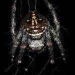 This spider weaves the most durable web. What is his secret?