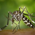 Radiation and biological weapons destroyed mosquitoes in China