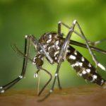 A sugárzás és a biológiai fegyverek elpusztították a szúnyogokat Kínában