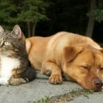 Who is smarter - cats or dogs?