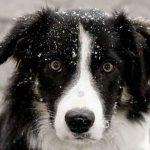 En undersøgelse af hundernes intelligens gav interessante resultater.