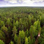 ماذا يحدث إذا كان هناك غابة حول حجم القارة على الأرض؟