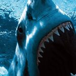 10 most dangerous sharks that kill people