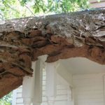 Huge wasp nests found in the USA and impossible to destroy.