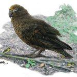 The remains of the largest parrot in history discovered in New Zealand