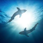 لماذا تتوهج أسماك القرش في الظلام