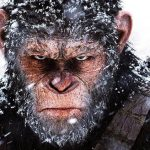 Вчені виростили перший в світі гібридний ембріон мавпи і людини
