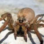 Global warming could piss off spiders