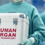 Organ transplants from animals to humans will happen this year.