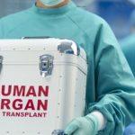השתלות איברים מבעלי חיים לבני אדם יתרחשו השנה.
