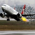 Why do birds collide with airplanes?