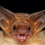 How do bats hunt?