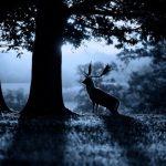 Zbog ljudi su mnoge životinje počele živjeti noću.
