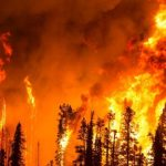 A model has been developed that can predict forest fires 20 minutes before a fire.
