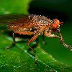 Why do flies rub their paws?